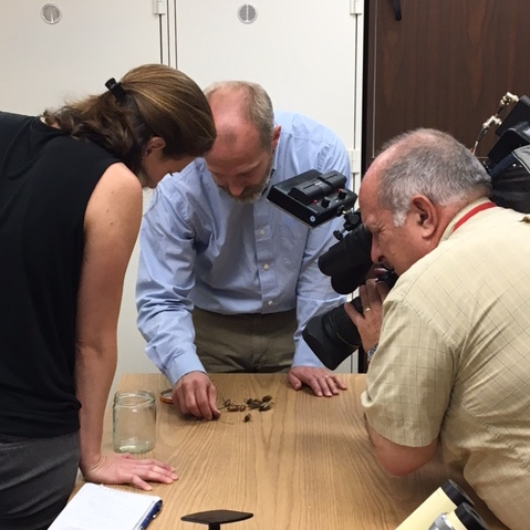 John LaPolla and Catherine Hawley examine cicadas at TU's insect lab.