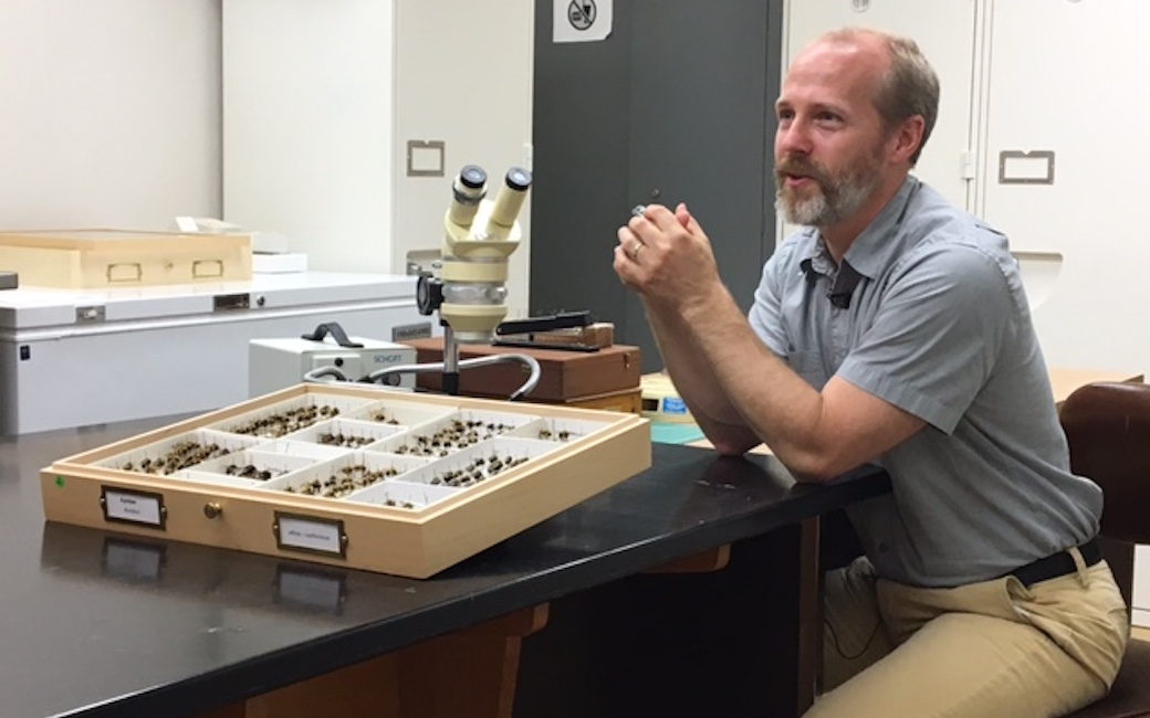 John S. LaPolla, Ph.D., entomologist and associate professor, biological sciences, Fisher College of Science & Mathematics