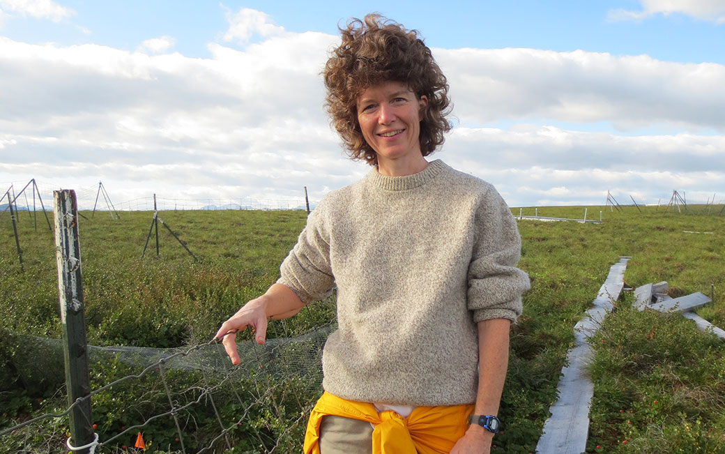 Laura Gough at an Arctic Long-Term Ecological Research Project (LTER) experimental site (photo: Rebecca Rowe)
